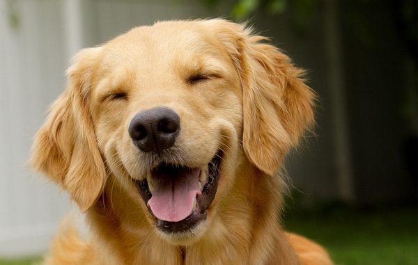 Para tu mascota el mejor pienso para perros e incorpora for Mejor pienso para perros